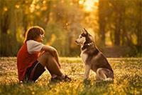 Прививки для собаки какие и когда - 8