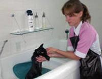 Во время мытья кошки на дно ванны лучше положить резиновый коврик