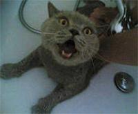 Далеко не все кошки любят принимать ванну