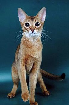 Кошек делится на четыре типа