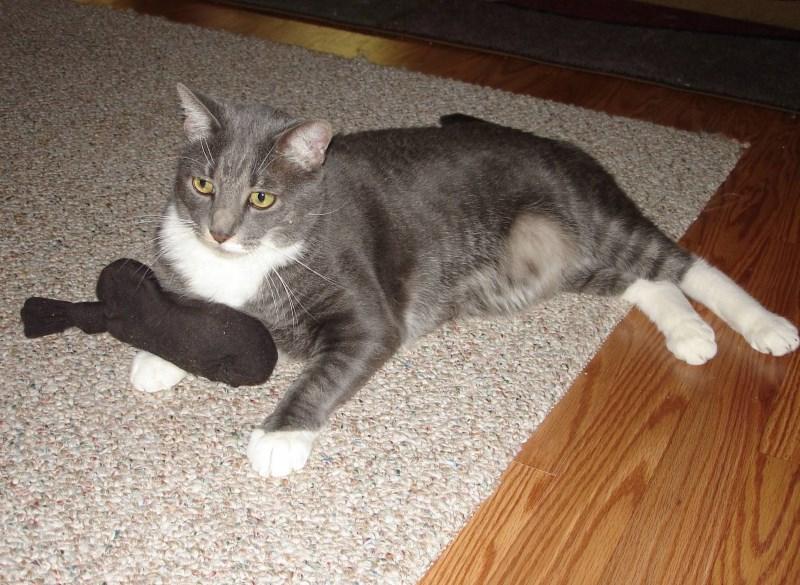 Течка при беременности у кошек