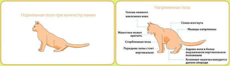 Отзывы о каменном масле при лечении простатита