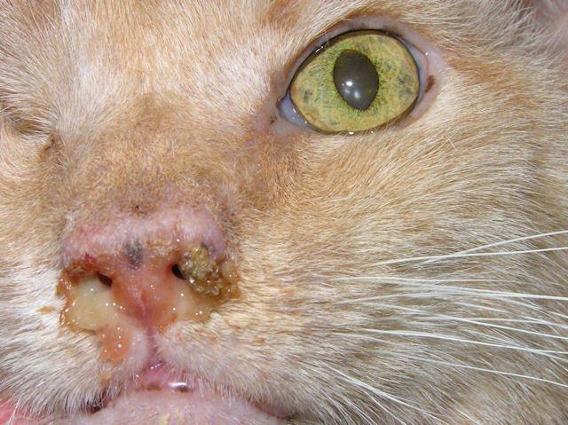 препараты для кота от глистов
