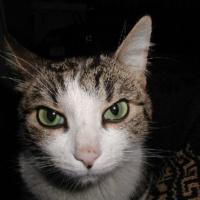 9. RSS.  Беспородные кошки.  Блог им. rujersi.