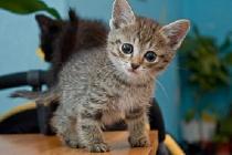 рахит у котят фото
