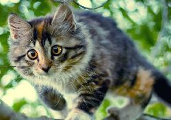 Болезни Дрожь (тремор) у котов