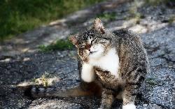 Болезни Кошка чешется, грызет себя