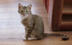 Болезни Кошка без причины сильно худеет