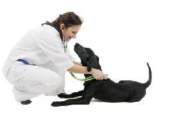 Болезни Артрит у собак