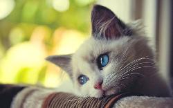Болезни Кошка мало пьет или не пьет вообще