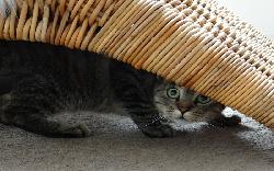 Болезни Кошка Беспокойная