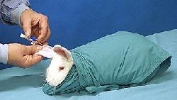 Болезни Инфекционные болезни кроликов