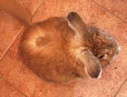 Болезни Стригущий Лишай у Кроликов