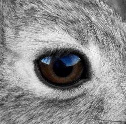 Болезни Болезни Глаз у Кроликов