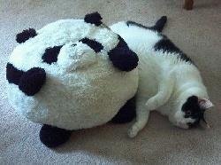 Болезни Метеоризм у кошек